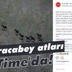 Karacabey atları Time'da!