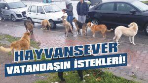 Hayvansever vatandaşın istekleri!