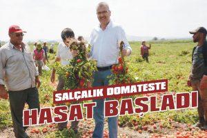 Salçalık domateste hasat başladı