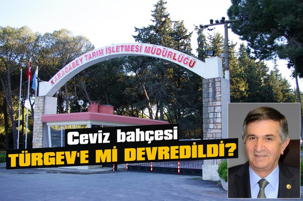 Ceviz bahçesi Türgev'e mi devredildi?