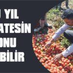 Bu yıl domatesin sonu olabilir