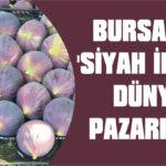 Bursa'nın 'Siyah İnci'si dünya pazarında