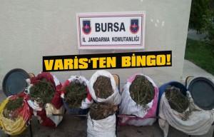 Varis'ten bingo!