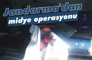 Jandarma'dan midye operasyonu