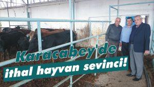 Karacabey'de ithal hayvan sevinci!