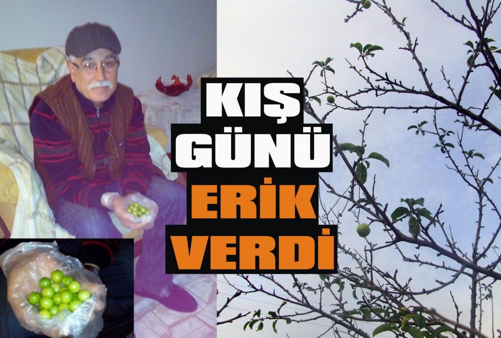Erik ağacı meyve verdi!