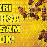 Arıları koruyun yoksa yaşam yok!