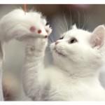 Kediler Güzellik Yarışında